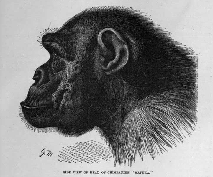 chimp.profile.public.domain